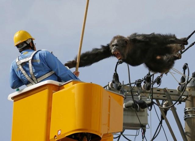 Дикая обезьяна