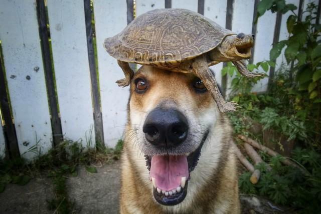 Собака и черепаха