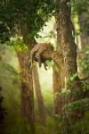 Киса на дереве