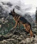 Собака высмотряка